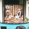 台中最大寵物餐廳擁有泳池與毛孩同樂餐點美味又可愛-狗仔杉寵物餐廳