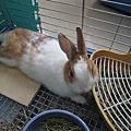 親親小兔溫跳跳~便盆卡卡記