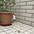 親親小兔溫跳跳~頂樓跑跑跑