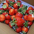 2017.2.11溫馨光觀草莓園