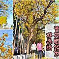 2018.03.03林森路黃花風鈴木