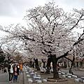 2019.04.02名古屋東山動植物園