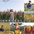 2020.02.16學甲蜀葵花海