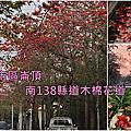 2020.03.08潭頂木棉花道