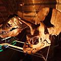 英國自然史博物館恐龍展區~
