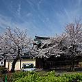 2012.04.10 日本賞櫻之旅 Day 3
