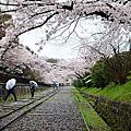 2012.04.11 日本賞櫻之旅 Day 4