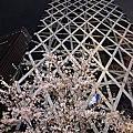 2014.03.30 東京瞎拚賞櫻團 Day 1