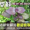 香草植物:))筆記