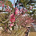 201503 京都快閃DAY2(上):北野天滿宮、嵐山、琴きき茶屋、廣川鰻魚飯
