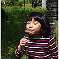 舞鶴公園紫藤