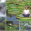 【台北景點】雙溪公園-2017大王蓮奇幻漂浮