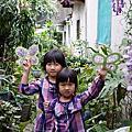 紫藤勞作2014.4.2