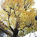 2011.11.20 - いちょ祭