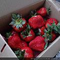 20170225苗栗菊園草莓餐薑麻園最後一家得草莓園