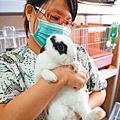 兔兔相關新聞