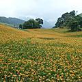 花蓮六十石山