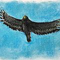 觀音觀鷹生態繪畫