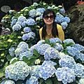2018 陽明山繡球花