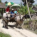 泰國布吉親子遊 (1) 泰國 野生叢林探險