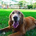 肢障輔助犬