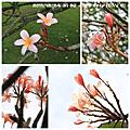 20111224-31 SG+MY Trip