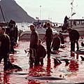 2010年10月13日(三)丹麥的暴行