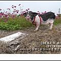 2012.01.25[年假]大年初三.美濃花海+高雄休閒農場露營