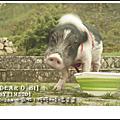 2012.06.04歐咪七歲啦!玉山國家公園.塔塔加