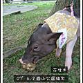2007.6.2圓山豬聚大家的照片