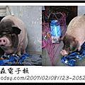 新聞裡的豬豬