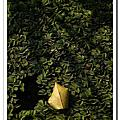 攝影課外拍練習3-彰化三春老樹