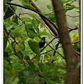 20070909新竹綠世界