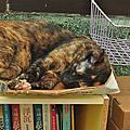 2014年貓孩子生活照
