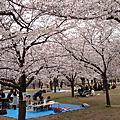 大阪城櫻花200804