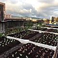 新北市頂樓參與式農場