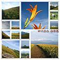 20080905 花蓮 金針花之旅