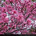 2014.04.04~09大阪京都:西之丸庭園&大阪城