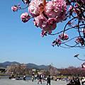2013-04-13 京都嵐山渡月橋