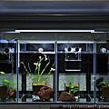 111019-魚樂樂FishLiv 2尺 T5 燈