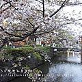 2015京阪花見自由行Day1(4/8~4/15)