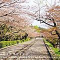 2015京阪花見自由行Day2(4/8~4/15)