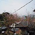 3.4.2012 貓空空