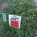 日本wwoof第十九天
