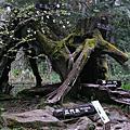 08阿里山(森林浴篇)