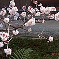 103年春天日本栗林公園