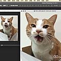 愛畫畫的貓仔新工具好物入手-AERY觸控筆體驗GT1060黑