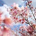 【2013】武陵找花兒