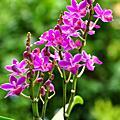 麒麟花、蘭花