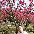 陽明山櫻花 :)